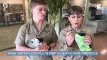How You Can Help the Irwin Family's Australia Wildfire Relief Efforts