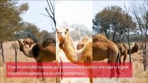 L'actualité de la semaine JeanMarcMorandini.com 09012020