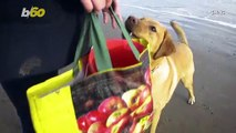 Dog Turns Her Talent Into Paws-Itive Effort By Retrieving Trash From Seaside Town!