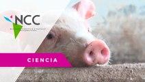 Proyecto de repoblación en granja de porcinos
