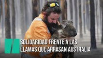 Solidaridad internacional para salvar a los animales de los incendios de Australia