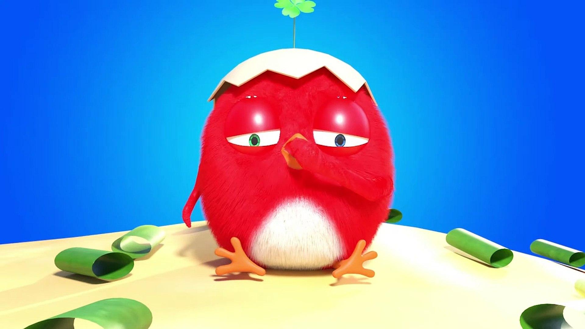 CucKoo Cartoon  Cuckoo Chicken 2020 - Part 8 Drôle de bande dessinée pour les enfants 2020