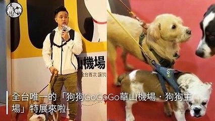 CollectionVideo-petmao_curation-copy1-PetsMaoParser-2020/01/10-11:06