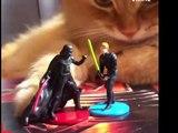 Ce chat est fan de la série Star Wars !