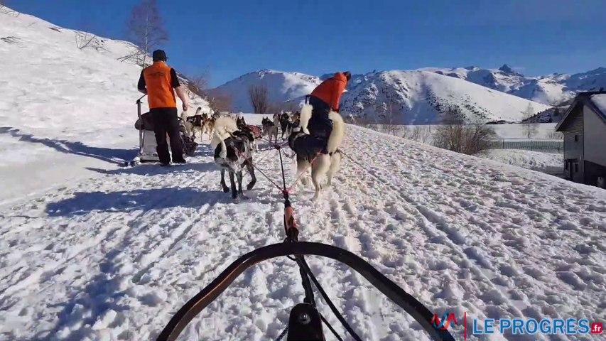 Balade en chien de traîneau à l'Alpe d'Huez
