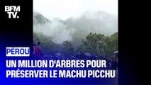 Un million d'arbres pour sauver le Machu Picchu