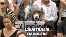 Les Australiens manifestent contre la gestion des incendies de leur Premier ministre