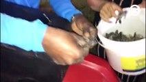 Estudante encontra ninho de tartaruga em Pontal do Ipiranga