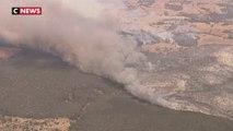Au moins un milliard d'animaux sont déjà morts dans les incendies en Australie