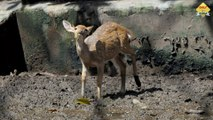 Alipore Zoological Garden, Kolkata Zoo, West Bengal, India 4K
