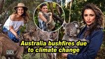Parineeti: Australia bushfires due to climate change