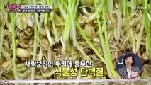 보리의 100배 영양소? 새싹보리의 효능과 성분