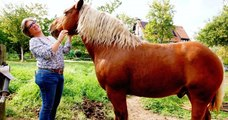 Le cheval Sésame va devoir changer de parcelle car l'odeur de son crottin dérangeait les voisins