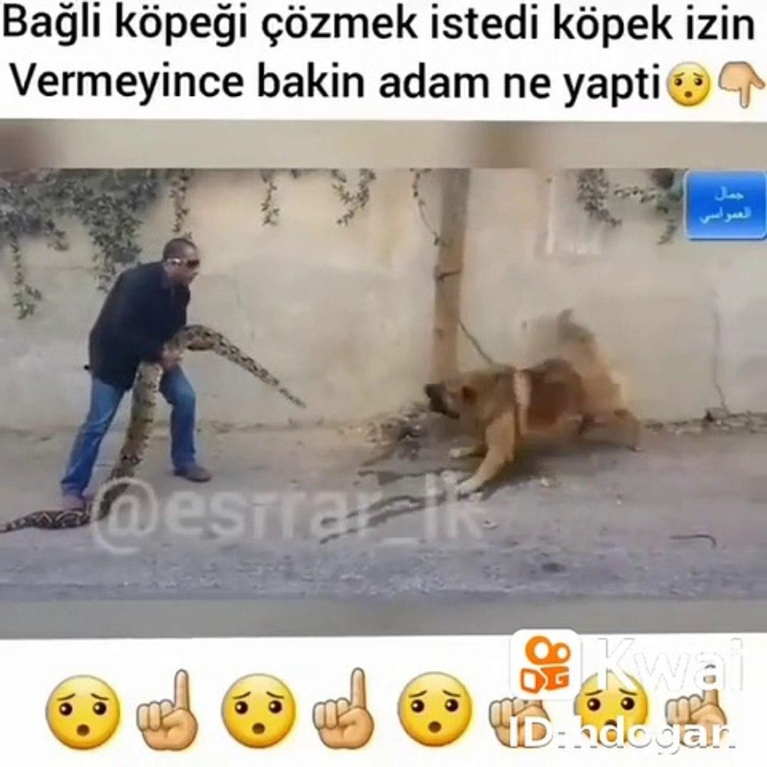 KAFKAS COBAN KOPEGi ve PiTON YILANI - CAUCASiAN SHEPHERD DOG and SNAKE