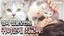 [냐옹은 페이크다] 세젤예 서열1위 껌이 보고가실게요~ (우석, 선호, 신동엽, 오정세) | Decoding Meow