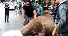 Şanlıurfa deve kesen ıraklı kasap bu kez hayvan borsasında esnafla kavga etti