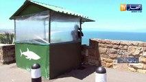 روبورتاج: في جنوب إفريقيا.. البشر وأسماك القرش يعيشون في محيط واحد