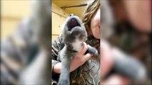Ce chiot apprend à hurler et c'est trop mignon
