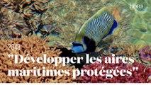 """Une idée pour sauver les océans : """"Développer les aires maritimes protégées"""" par Laurent Ballesta"""