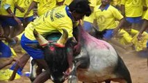 SC to hear plea on Jallikattu issue tomorrow