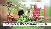 4 Anggota Keluarga Jokowi Ramaikan Pilkada 2020, Siapa saja?