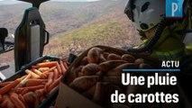 Australie : des carottes jetées depuis un hélicoptère pour nourrir les animaux