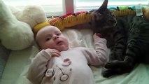 Ne sachant que faire du bébé qui s'est réveillé près de lui, ce chat finit par tomber.