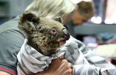 Fast eine halbe Milliarde Tiere wurden bei den Bränden in Australien getötet