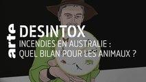 Incendies en Australie : quel bilan pour les animaux ? | 14/01/2020 | Désintox | ARTE