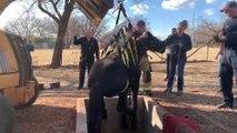 Voilà ce qui s'est passé lorsqu'un cheval est tombé dans un vieux puits