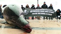 Marine conservation society Sea Shepherd brings dead dolphins to central Paris to highlight overfishing