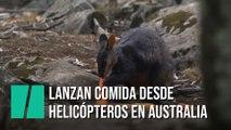 Lanzan comida desde helicópteros para ayudar a los animales en Australia