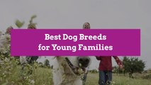 Best Dog Breeds for Young Families