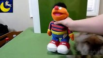 TMX Tickle Me Ernie from Fisher Price Mattel 2006 Review