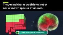 Robôs vivos a partir de células-tronco