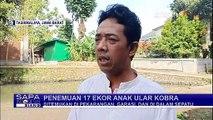 Geger 17 Anak Ular Kobra Ditemukan di Lingkungan Pesantren