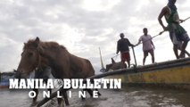 Groups rescue animals left behind after Taal volcano eruption