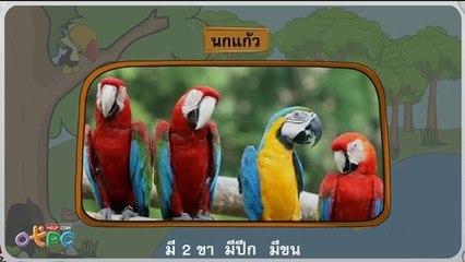 สื่อการเรียนการสอน กิจกรรมจัดกลุ่มสัตว์ ป.1 วิทยาศาสตร์