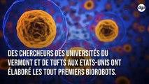 Première mondiale : des robots conçus entièrement à partir de cellules vivantes