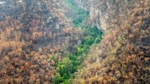 Epic effort saves rare Prehistoric pine trees from Australia bushfires