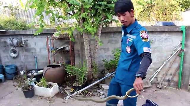 Cobra caught in Thai family's front garden after spitting venom at brave pet dog
