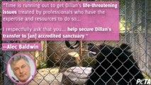 Alec Baldwin leads PETA push to free bear