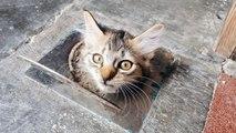 Une adorable chatte coincée dans une canalisation