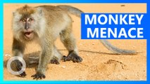 Villagers in India flee after being terrorized by army of monkeys