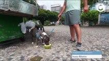 Conheça as regras para andar com animais em locais públicos