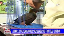 Animals, other endangered species rescued from Taal eruption