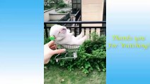 Cute Pets And Funny Animals Compilation #3 - Pets Garden