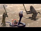 Unbelievable Monkey Save Mouse From Snake Hunting - Top Snake vs Prey
