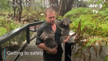 Downpour triggers flash floods at Australian zoo