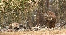 Incendies en Australie : l'image bouleversante d'un koala pleurant son compagnon mort a ému les Australiens